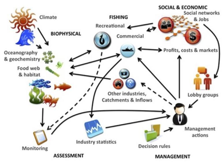 beth-ecosystem